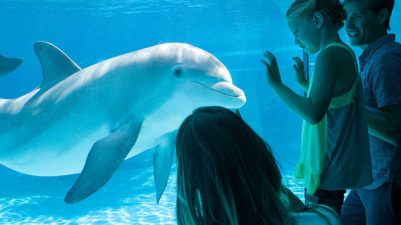 Siegfried Roy 39 S Secret Garden And Dolphin Habitat At The Mirage My Belle Elle